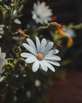 Witte bloemblaadjes met waterdruppels en stuifmeel