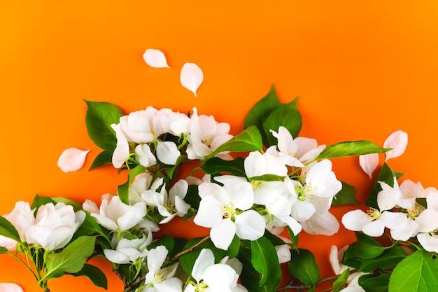 Witte bloemen appelboom tak grens behang sjabloon