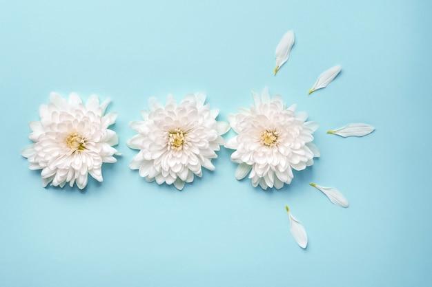 Witte bloemen en bloemblaadjes op een blauwe achtergrond. bloemensamenstelling en plaats voor tekst