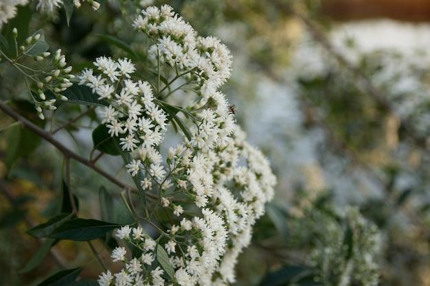 Witte bloemen en kleine bijen.