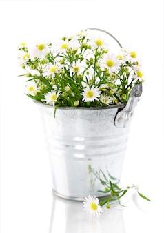 Witte bloemen in een pot