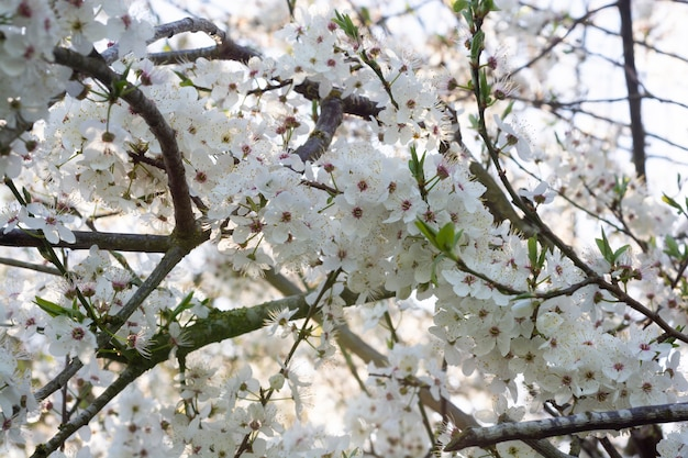Witte bloemen op boomachtergrond