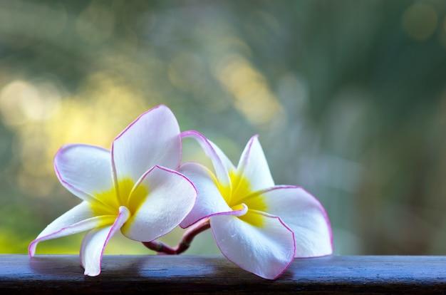 Witte bloemen op de plank