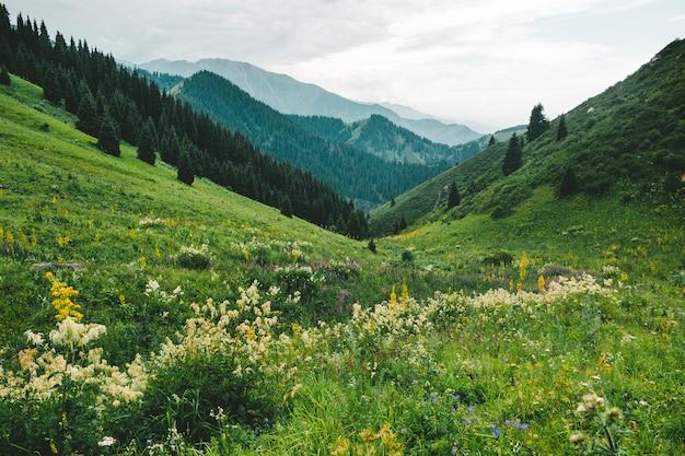 Witte bloemen op een berg groene weide.