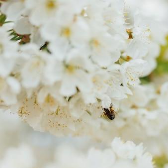 Witte bloemen op een tak
