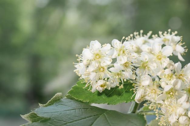 Witte bloemen op groen