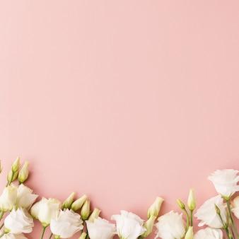 Witte bloemen op roze achtergrond