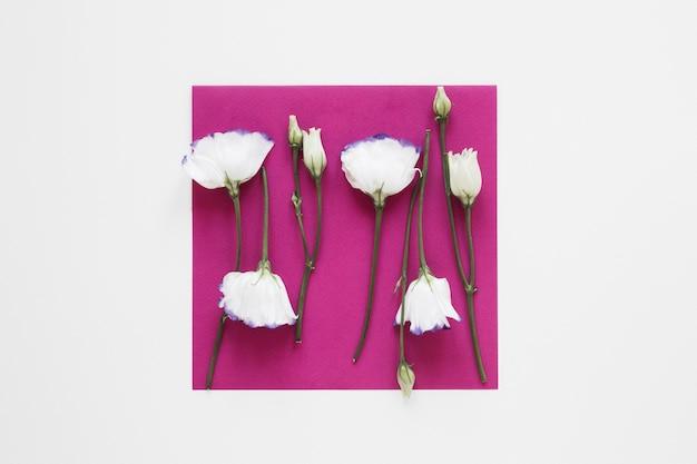 Witte bloemen op stuk van papier lente concept