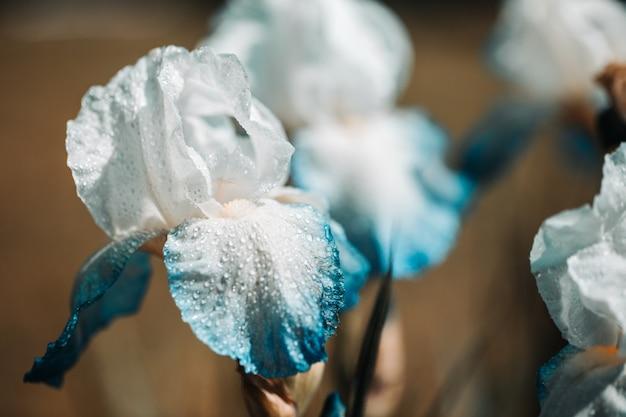 Witte bloemiris die in een tuin bloeien