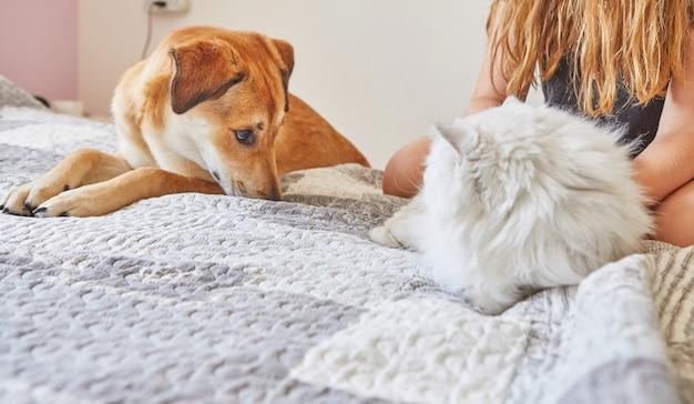 Witte britse kat en grote gember schattige hond zittend op het bed naast elkaar.