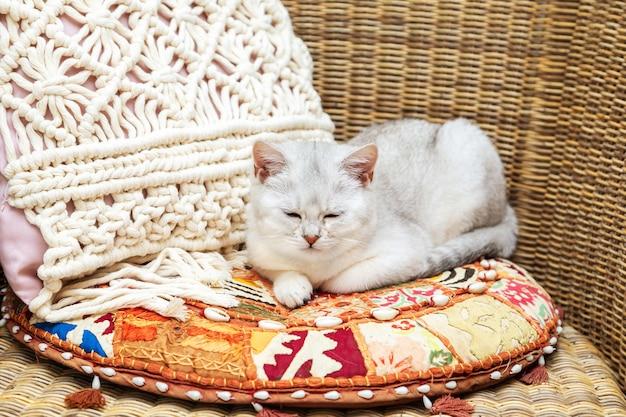 Witte britse kat in een rieten stoel op een helder kussen.
