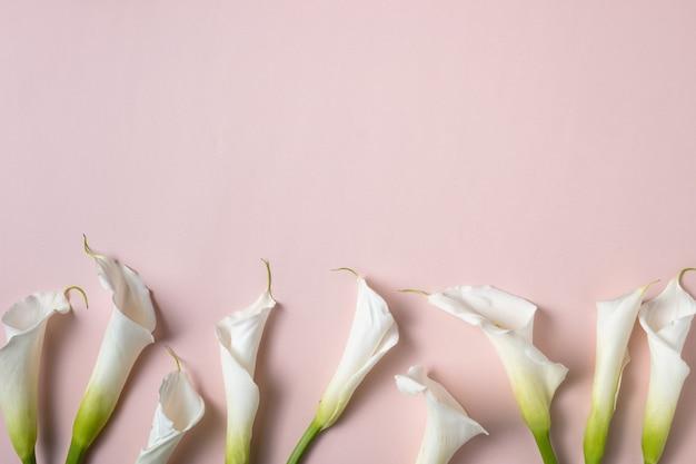 Witte calla lelies op roze achtergrond met kopie ruimte