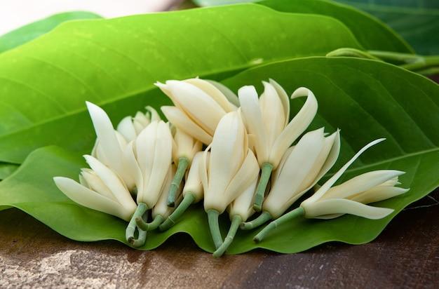 Witte champakabloem met blad en op oud hout