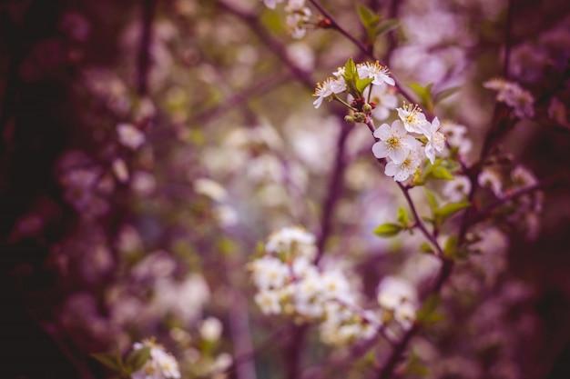 Witte cherry blooming trees retro