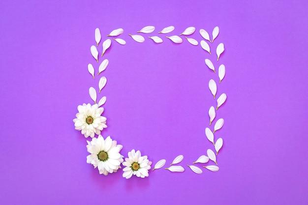 Witte chrysant in de vorm van vierkant op een paarse achtergrond