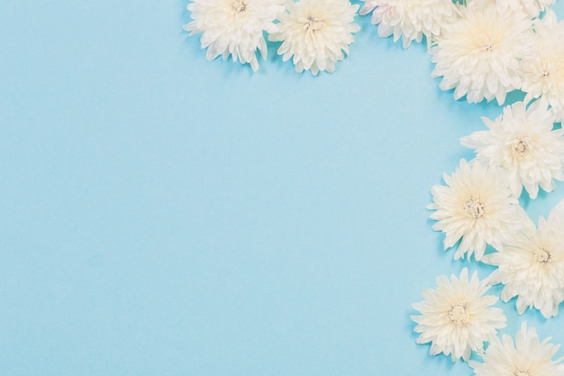 Witte chrysanten op blauw papier achtergrond