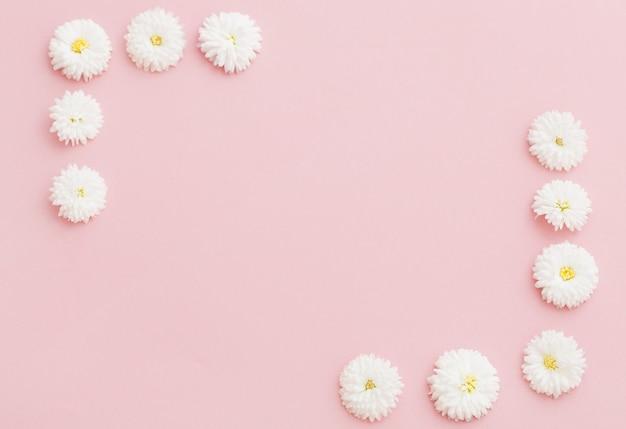 Witte chrysanten op roze papier