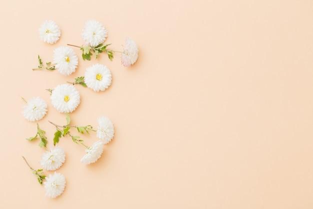 Witte chrysanten