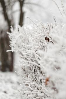 Witte close-uptakken van bevroren takken