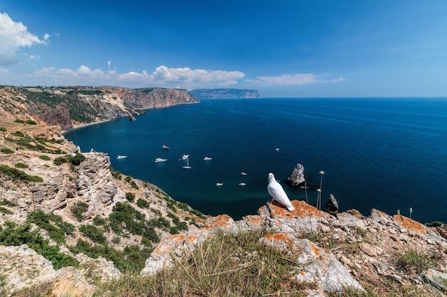 Witte duif staande op rots boven zee. bruiloft concept. mooi, zeegezicht met jachten op de achtergrond.