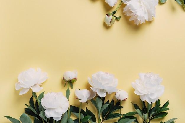 Witte elegante pioenrozen op de gele muur