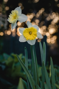 Witte en gele bloem in de lens van de schuine standverschuiving