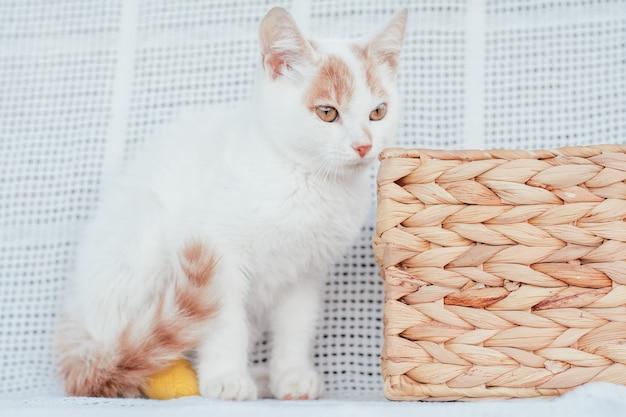 Witte en gemberkat 3-4 maanden naast rieten mand op lichte deken. kitten met voet, verbonden met geel verband