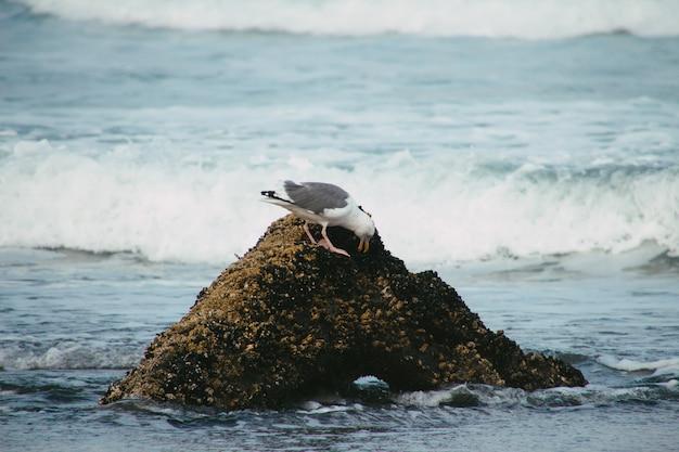 Witte en grijze zeemeeuw op de top van een rotsformatie in de golvende zee