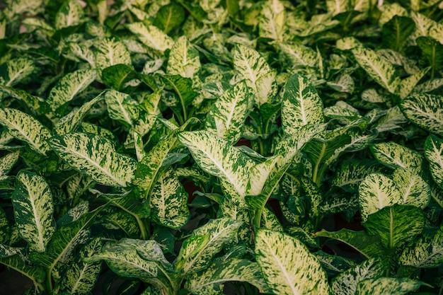 Witte en groene bladerenachtergrond