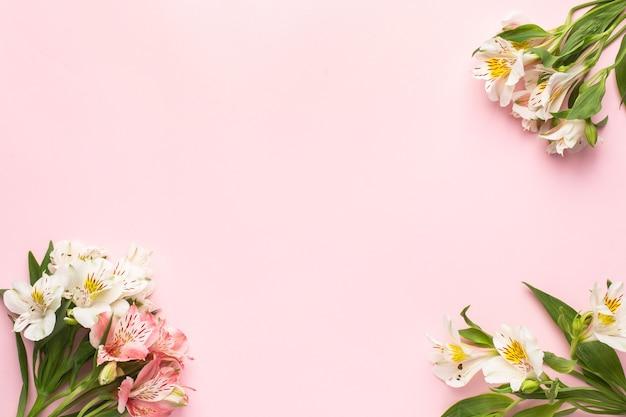 Witte en roze bloemen alstroemeria op een roze
