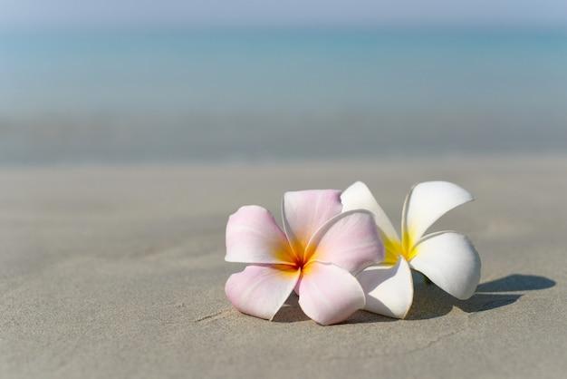 Witte en roze plumeria frangipani bloemen op zandstrand voor zeekust