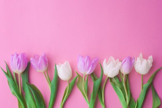 Witte en roze tulpen op een roze achtergrond. conceptie van de dag van de vrouw, lente.