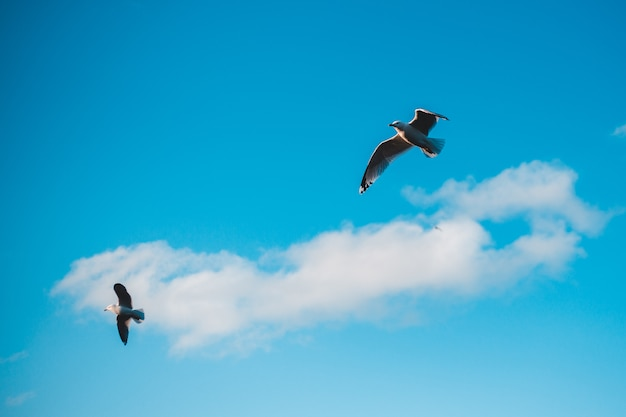 Witte en zwarte vogel die onder blauwe hemel overdag vliegt