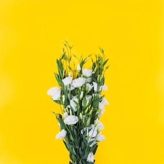 Witte eustomabloemen tegen gele achtergrond