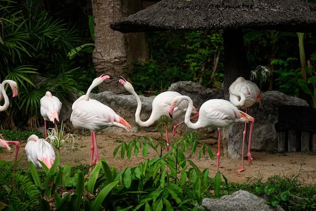 Witte flamingofamilie die in aard leeft