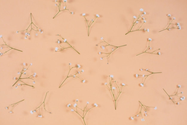 Witte gipskruid op een beige pastelkleurig bureaupatroon