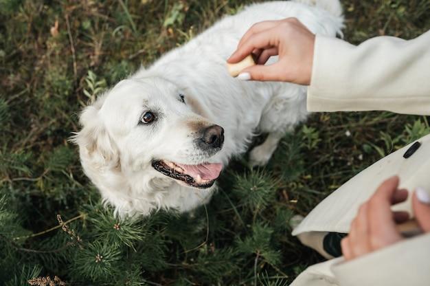 Gedroogde rundvleespenissen in het hondenvat op het houten bord en wat  messen en groenten op de achtergrond. kauwsnacks voor gedomesticeerde honden.  | Premium Foto