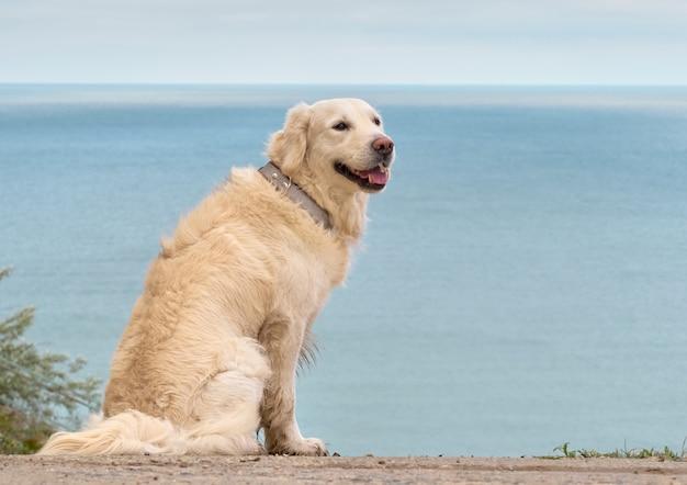 Witte gouden labrador retriever hond op het strand