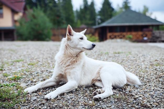 Witte hond die en de straat ligt beschermt.