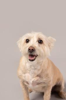 Witte hond die schattig is in een studio