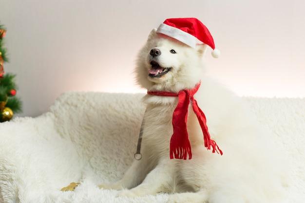 Witte hond in een rode sjaal en muts.