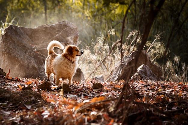 Witte hond met zonlichtstralen