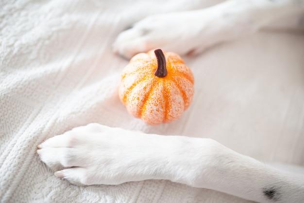Witte hondenpoten met een pompoen.