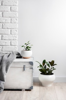 Witte houten kist en jonge huisplanten in witte bloempotten op een witte muur