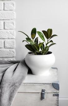 Witte houten kist met jonge rubberplant in witte bloempot en grijze zachte fleecedeken erop. witte muur met bakstenen op achtergrond