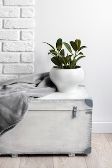Witte houten kist met jonge rubberplant in witte bloempot