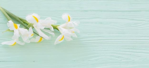 Witte irissen op groene houten achtergrond Premium Foto