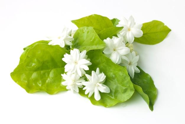 Witte jasmijn bloemen verse bloemen natuurlijk