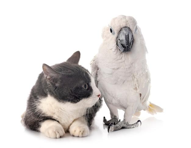 Witte kaketoe en kat geïsoleerd op wit