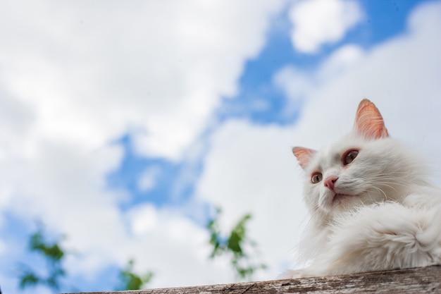 Witte kat buiten genieten van de natuur vrijheid